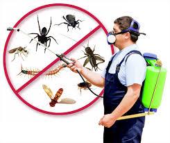 مكافحة حشرات بخيبر الجنوب