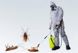 مكافحة حشرات بابها